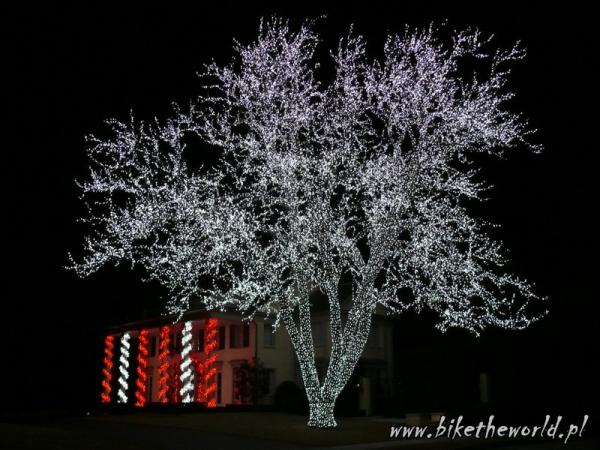 05-Decorated tree