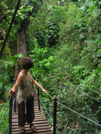 Walk through the tropical forest