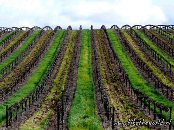 84-California. Tempelton. Wine Country
